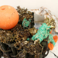 seaweedwork